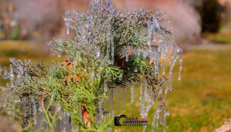 یخبندان نجف آباد از دریچه دوربین